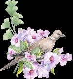 corner-bird.png