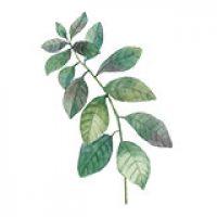 icon-leaf3.jpg
